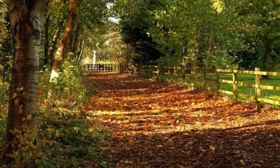 autumn romantic backgrounds