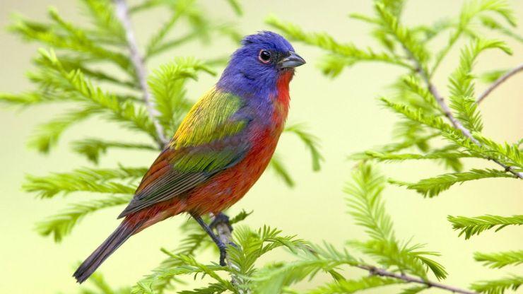 wallpaper of beautiful birds