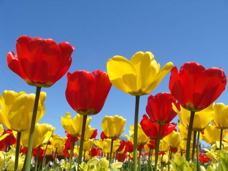 HD Spring flowers desktop 3264p