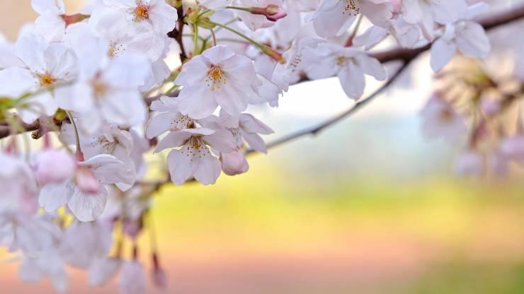 HD Spring images free desktop 1920p