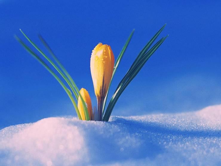 HD Spring images wallpaper desktop 1600p