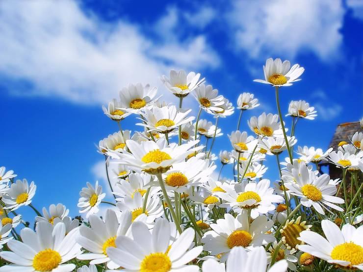 HD Spring photos desktop 1600p