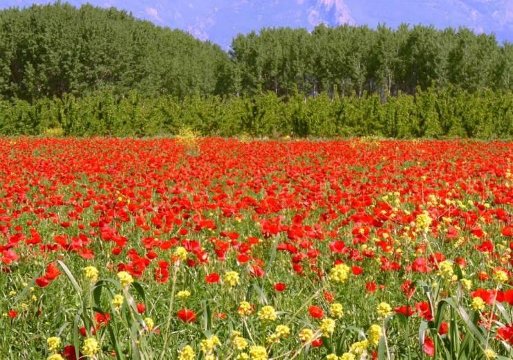 HD Spring scenery desktop 1024p