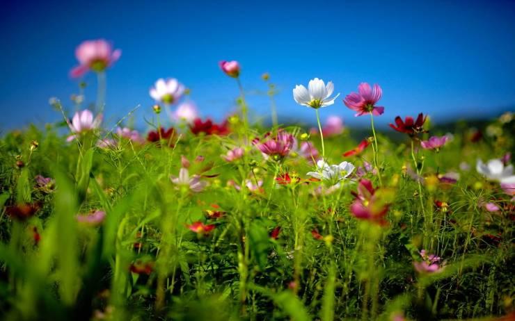 HD Summer pictures for desktop background smartphone desktop 1440p