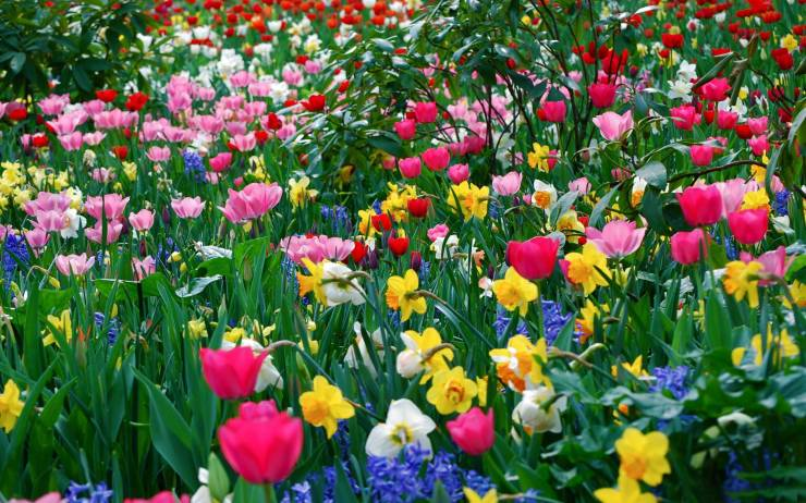 HD Wallpaper spring flowers android, Pc Desktop 2560p