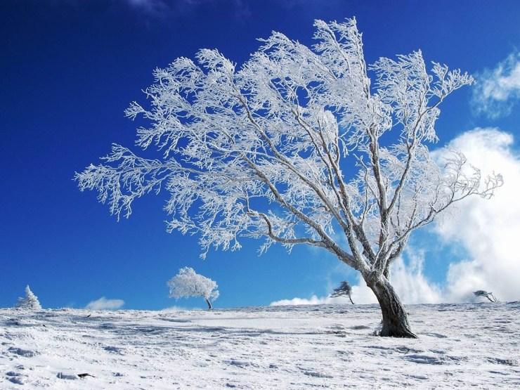 Hd wallpaper winter windows desktop 1600p
