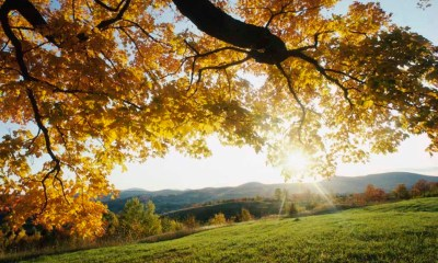 Nature autumn leaves wallpaper windows desktop 1024p