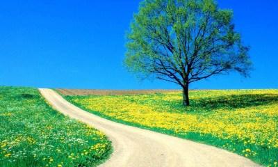 Spring background windows desktop 1600p