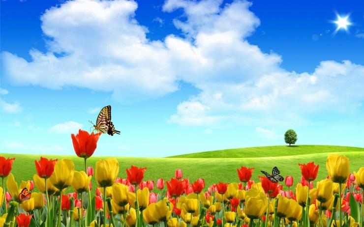 cute spring wallpaper