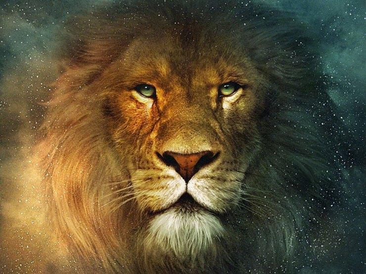 desktop wallpaper lion