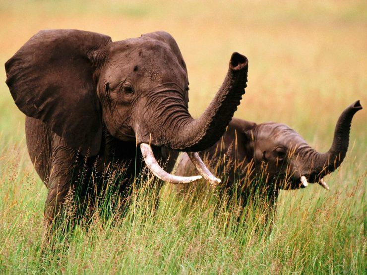 elephant photos download