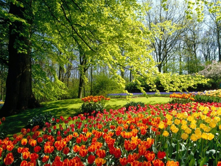 flower gardens spring wallpaper