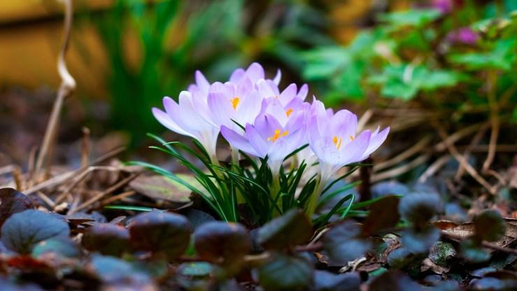 free spring photos