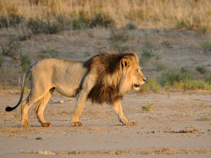 images for lions