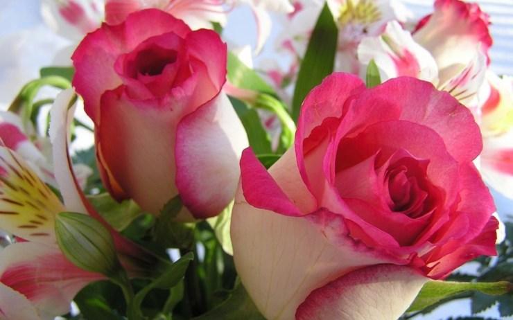 love flower wallpaper