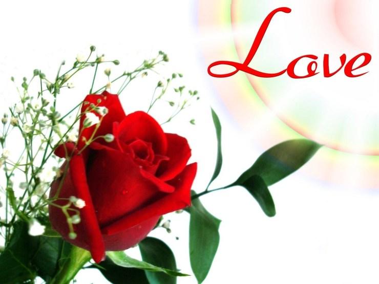love flowers wallpapers