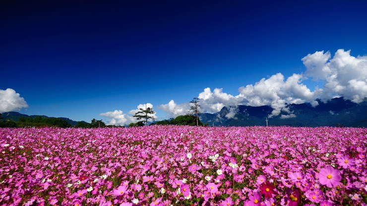 nature and flowers wallpapers