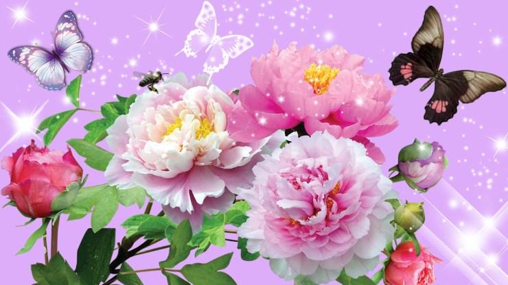 new flower wallpaper download