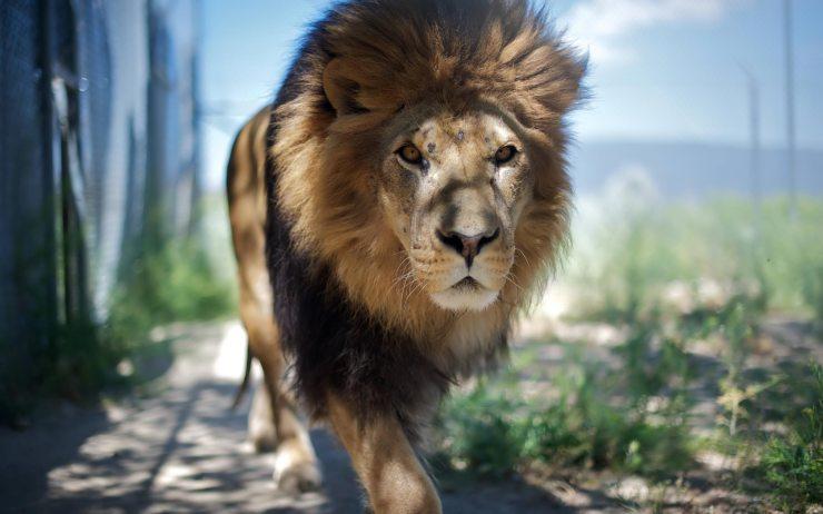 os x lion wallpaper