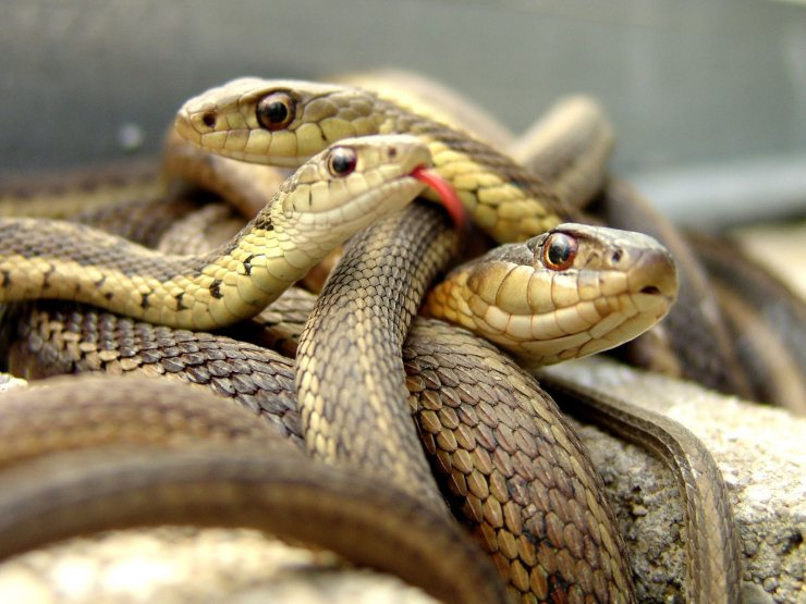 photos of snakes