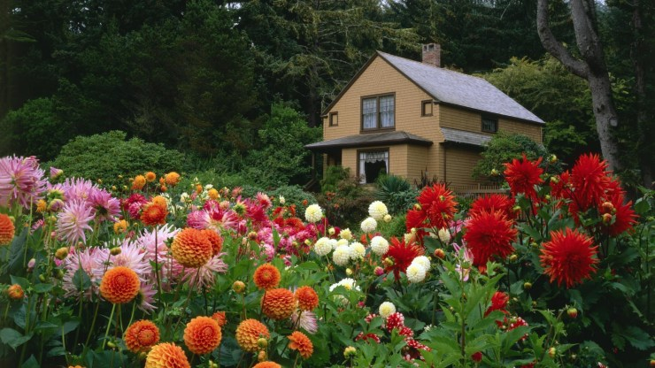 wallpaper flower garden
