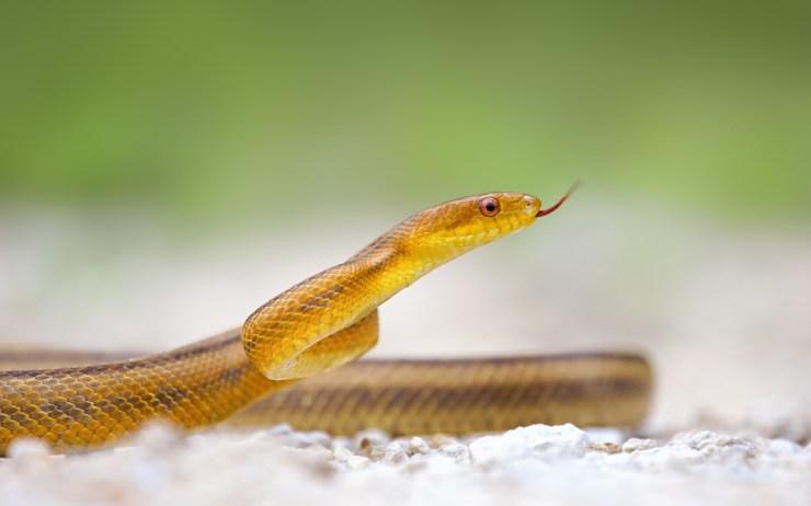 wallpaper snake