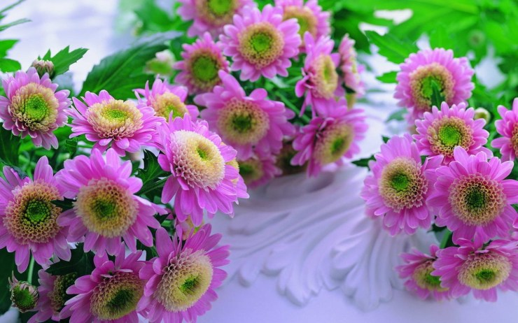 wallpapers of beautiful flowers