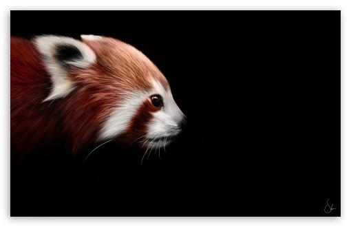 Black And Red Wallpaper Hd Animal 4k Hd Desktop Wallpaper For 4k Ultra Hd Tv Wide
