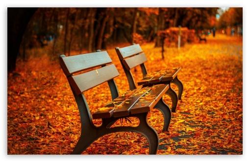 Fall Wallpaper 1440p Autumn Bench 4k Hd Desktop Wallpaper For 4k Ultra Hd Tv