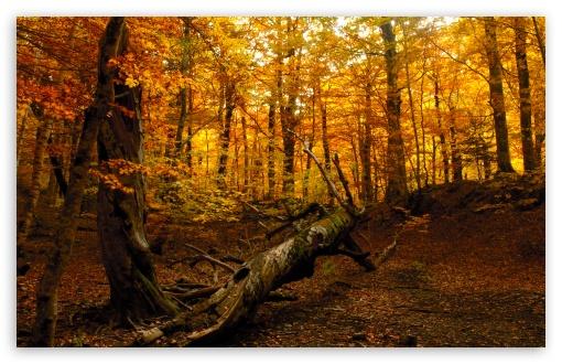 1440p Fall Wallpaper Autumn Forest 4k Hd Desktop Wallpaper For 4k Ultra Hd Tv