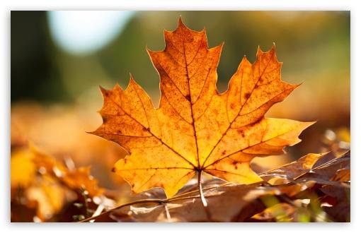 Hd Fall Wallpapers 1080p Autumn Leaf 4k Hd Desktop Wallpaper For 4k Ultra Hd Tv