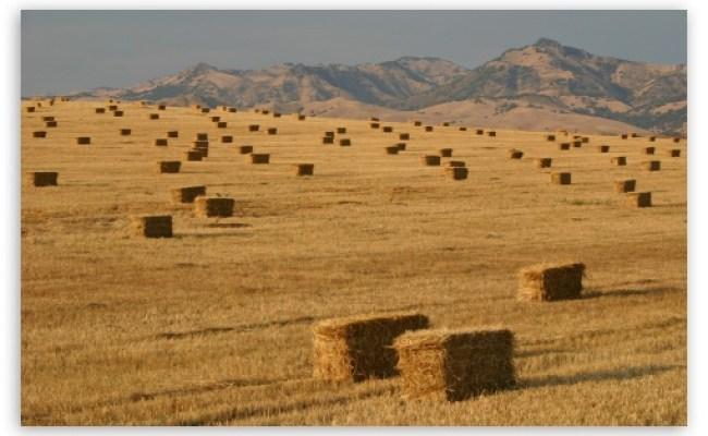 Bales Of Straw On The Field 4k Hd Desktop Wallpaper For 4k