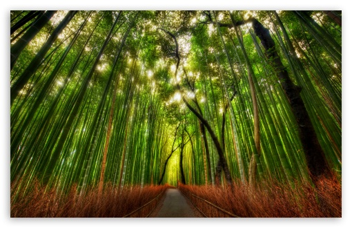 bamboo forest 4k hd