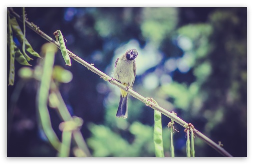Bird Ku Resimleri 4k Hd Desktop Wallpaper For 4k Ultra Hd