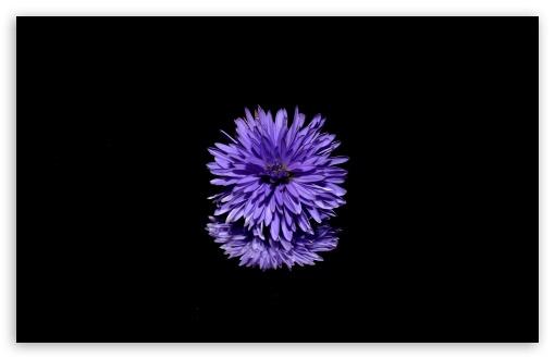 blue flower black background