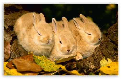 Fall Thanksgiving Wallpaper Free Cute Golden Rabbits 4k Hd Desktop Wallpaper For 4k Ultra