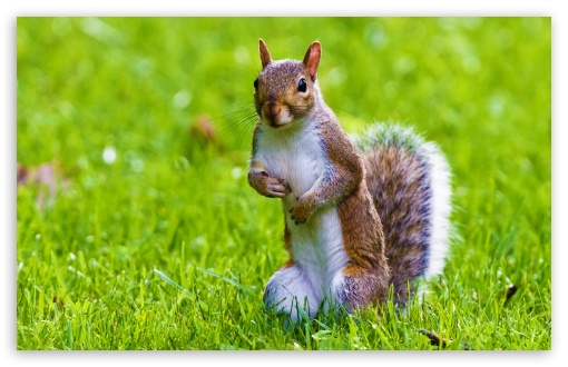 Cute Ipod Touch Wallpaper Cute Squirrel 4k Hd Desktop Wallpaper For Tablet