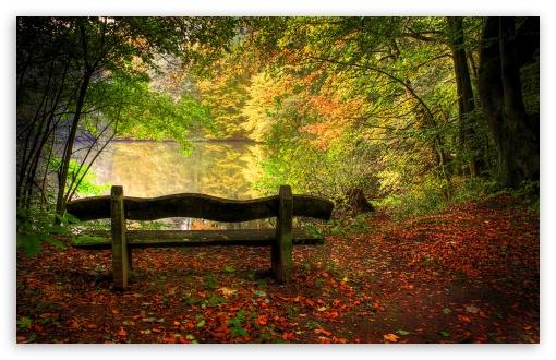 Fall Scene Desktop Wallpaper Empty Bench In Fall Scene 4k Hd Desktop Wallpaper For 4k