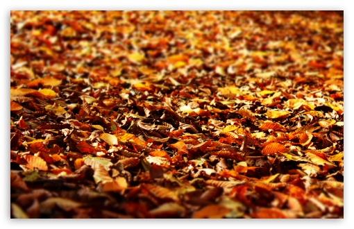 1440p Fall Wallpaper Fall Foliage Ultra Hd Desktop Background Wallpaper For 4k
