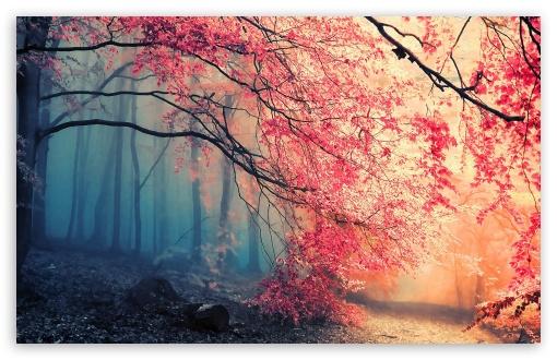 Fall Desktop Wallpaper Backgrounds Forest Fall Colors 4k Hd Desktop Wallpaper For 4k Ultra Hd
