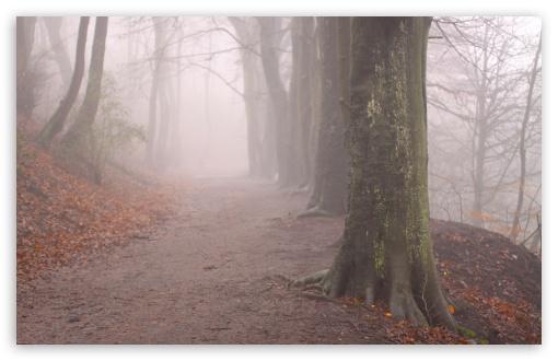 Hd Wallpapers 1080p Widescreen For Mobile Forest Fog Autumn Ultra Hd Desktop Background Wallpaper