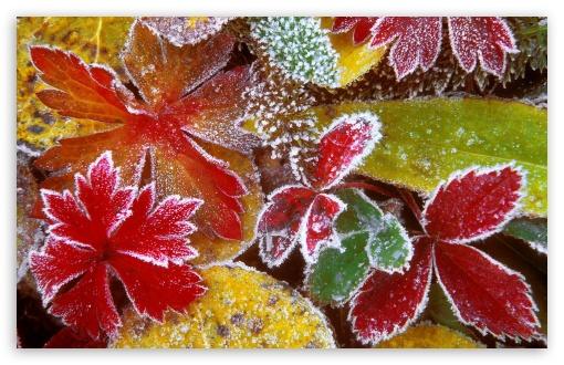 Leaves Fall Desktop Wallpaper Frosty Leaves 4k Hd Desktop Wallpaper For 4k Ultra Hd Tv