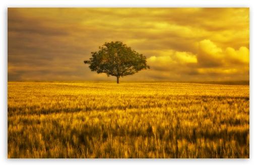 gold landscape 4k hd desktop wallpaper