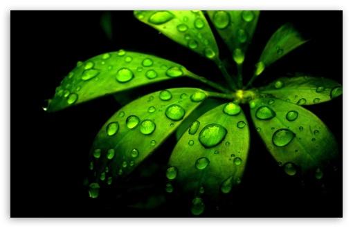 Iphone 5 Wallpaper Floral Green Flower 4k Hd Desktop Wallpaper For 4k Ultra Hd Tv