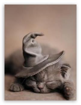 Harry Potter Wallpapers Hd For Desktop Halloween Cat 4k Hd Desktop Wallpaper For