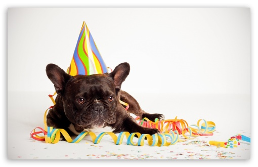Funny Wallpapers For Iphone 3gs Happy Birthday Dog 4k Hd Desktop Wallpaper For 4k Ultra Hd