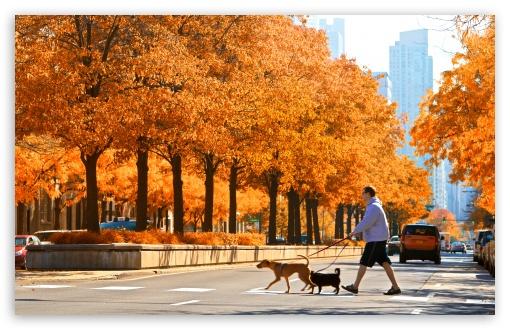 Chicago Bears Iphone X Wallpaper Lasalle Street Chicago Autumn Ultra Hd Desktop
