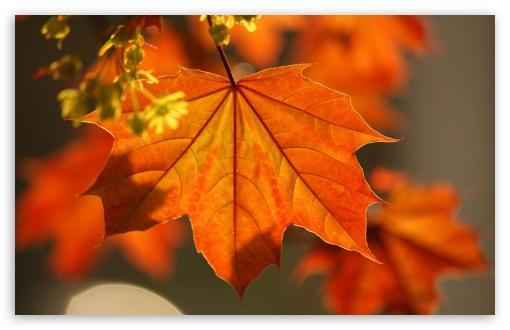 Fall Wallpaper For Tablet Oak Rust Colored Leaves 4k Hd Desktop Wallpaper For 4k