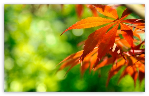 1440p Fall Wallpaper Orange Fall Leaves Against A Green Background 4k Hd