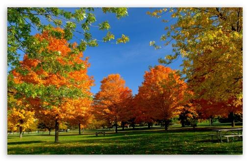 Fall Wallpaper 1440p Orange Fall Trees 4k Hd Desktop Wallpaper For 4k Ultra Hd